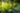 Leuchtend grünes Ginkgoblatt mit durchscheinendem Licht in Nahaufnahme
