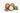Zwei ganze und eine geoeffnete Sheanuss mit weißem Fruchtfleisch und gruenen Blaettern auf weißem Untergrund