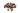 Nahaufnahme einiger Guranasamen auf weißem Hintergrund