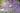 Naturaufnahme eines Verveinefeldes mit lilafarbenen Bluete mit Zitronenfalter in Nahaufnahme