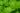 Nahaufnahme einiger leuchtend grüner Minzblätter