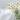 Glasvase mit einigen frischen Kamillenblumen auf grauem Hintergrund