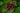 Nahaufnahme einer Quinoapflanze mit dunklelgruenen Blaettern und einer lila farbenen Bluete