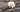 Dunkle Vanilleschoten mit großer weißer Bluete auf dunklem Holztisch in Nahaufnahme