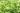 Naturaufnahme von gruenen Teestraeuchern mit leuchtend gruenen jungen Blaettern in Nahaufnahme