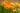 Mehrere orange und gelbe Calendulablumen mit offenen und geschlossenen Blütenblättern