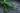 Nahaufnahme gruener Rosmarinzweig auf dunklem Untergrund