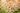 Zahlreiche Echinacea-Blumen auf einer Blumenwiese mit leichtem Sonnenschein