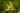 Naturbild einer Vanillepflanze mit gruener Bluete und geschlossenen Knospen in Nahaufnahme