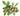 Geschlossene dunkelbraune Sheanuesse und gruene Blaetter auf weißem Untergrund