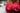Nahaufnahme frischer roter Himbeeren auf einem dunklen Tisch