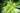 Von unten fotografierter Bambuswald mit dichten Bambushölzern und leuchtend grünen Baumkronen
