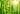 Zarte grün leuchtende Bambusstiele mit durchscheinendem Sonnenlicht
