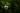 Lila Minzblüte am Strauch vor dunkelgrünem Hintergrund in Nahaufnahme