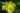 Naturaufnahme einiger leuchtend gelber Nachtkerzenblueten an Pflanze in Nahaufnahme
