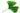 Einzelnes grünes Ginkgoblatt mit Wassertropfen auf weißem Hintergrund