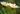 Zwei weiß gelbe Kamillenblüten mit Stängel in Nahaufnahme